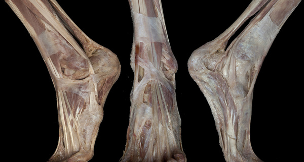 Anatomy Dissection: The quest for knowledge and beauty